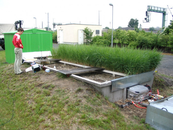 Искусственные болота для очистки сточных вод