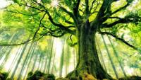 Как деревья общаются друг с другом? (Видео)