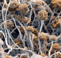 Людей ест не рак! - а грибы-слизевики.