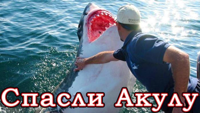 Люди спасают опасных акул (Видео)