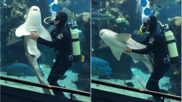 Невероятная дружба человека и акулы (Видео)