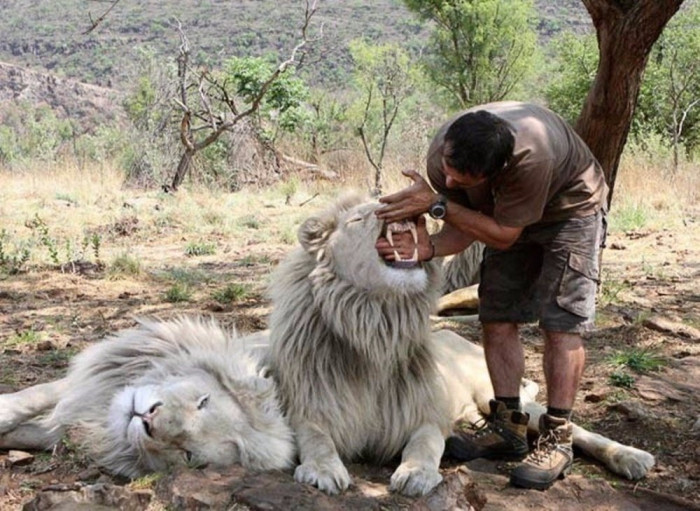 Заклинатель львов! (+Фото)
