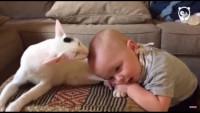 Малыш и его заботливая кошка (Видео)