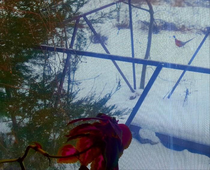 Последний мартовский снег в Счастливом, или в гостях у сказки (+Фото)