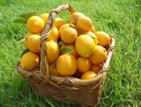 Почему лимон считают сильнее химиотерапии?
