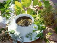 Целебные растения, из которых можно приготовить лечебные чаи