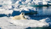 Все цвета Арктики в одном видео