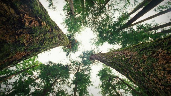 Как общаются деревья? (Видео)