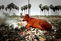 В Индии навсегда запретили пластик!