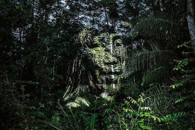 Природный стрит-арт в дождевых лесах Амазонки (Фото)