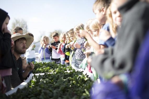 Брат Илона Маска обучает фермерству детей