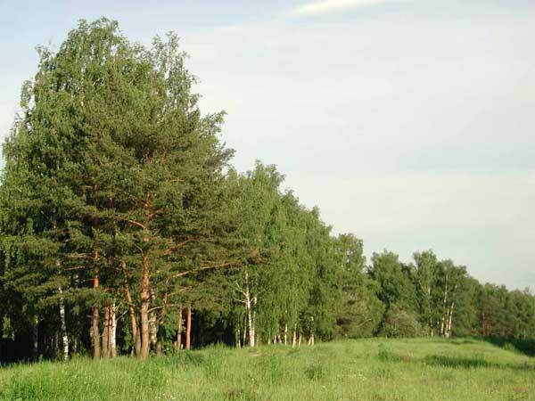 Чем является лес для Земли?