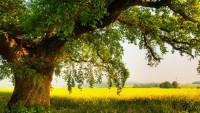 Для чего сажать дерево при рождении ребенка?