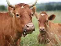 Является ли поедание животных людьми частью жизненного цикла? (Видео)