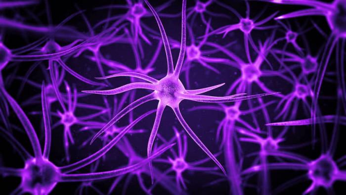 Нервную систему можно восстановить