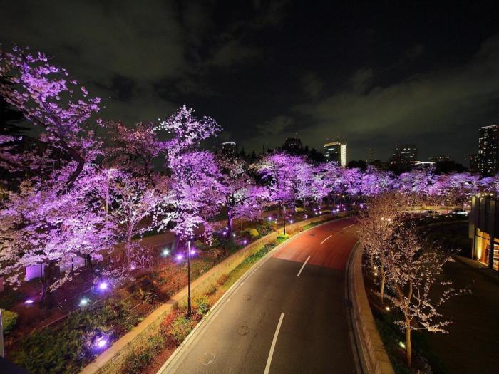 Прекрасная ночь в Японии (Фото)