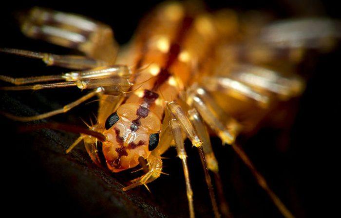Это маленькое животное очистит дом от мух. Не бойтесь его...