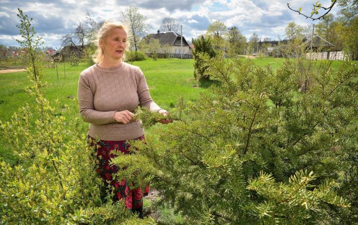 Для чего разговаривать со своими растениями?