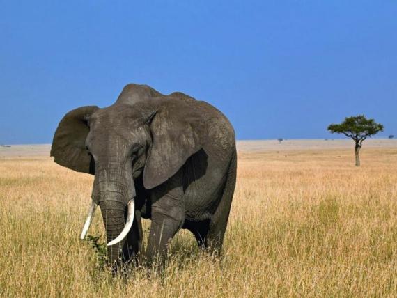 Дроны защищают животных от браконьеров