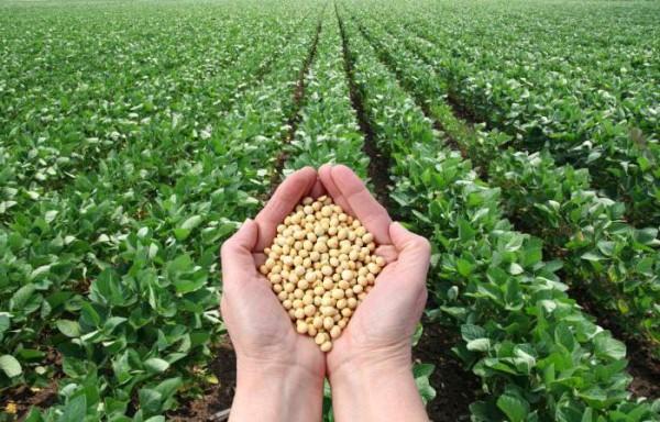 Вредит ли выращивание сои окружающей среде? (Видео)