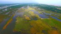 Болота очищают Землю от выбросов углерода (+Видео)