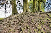 Поразительные открытия исследователей леса (Видео)
