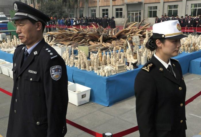 В Китае преподали страшный урок браконьерам слоновой кости (+Фото)
