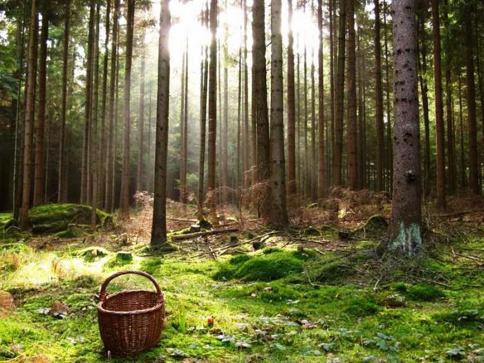 В Вологодской области выдают бесплатные гектары