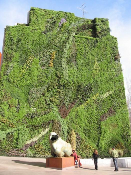 Зеленые стены - лучшая идея для озеленения городов (+Фото)