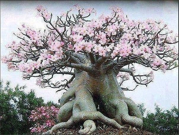 Самые удивительные деревья на Земле (Фото)