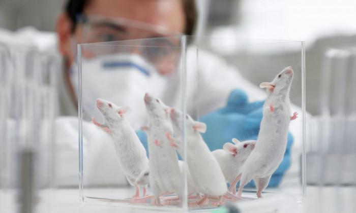 Эксперимент с мышами по созданию искусственной вселенной подарил уникальные знания для людей!
