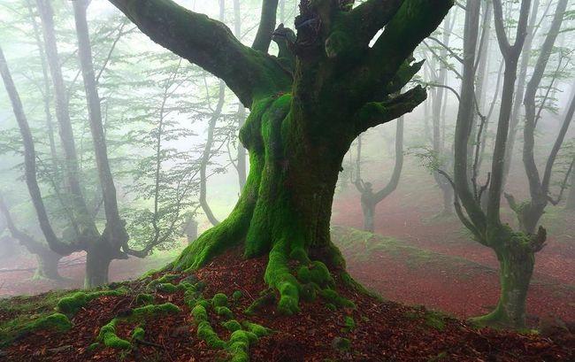 Волшебный лес в Испании (Видео)