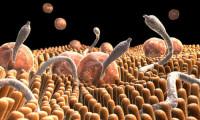 Паразиты в теле могут спровоцировать опасные болезни
