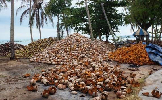 Микробы производят экологически чистую ткань из кокосовых отходов