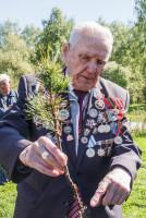 Каждый год ветеран высаживает кедры в местах воинской славы