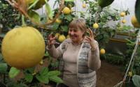 1,5 тонны лимонов и более 400 видов и сортов растений выращивает одна семья