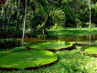 Тропические лес на выжженой земле (Видео)