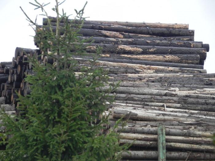 Экспедиция в защиту лесов России «Русский север»