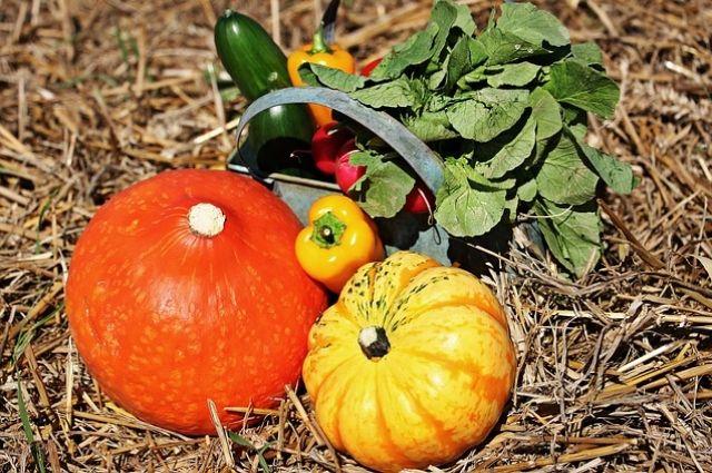 Как получить урожай без прополки и полива с помощью соломы?