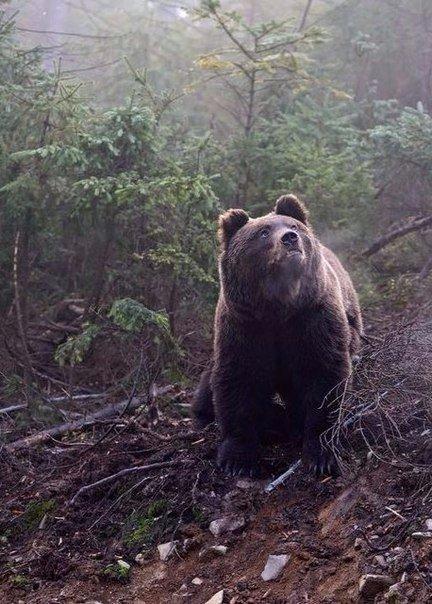 Древние хранители леса (Фото)