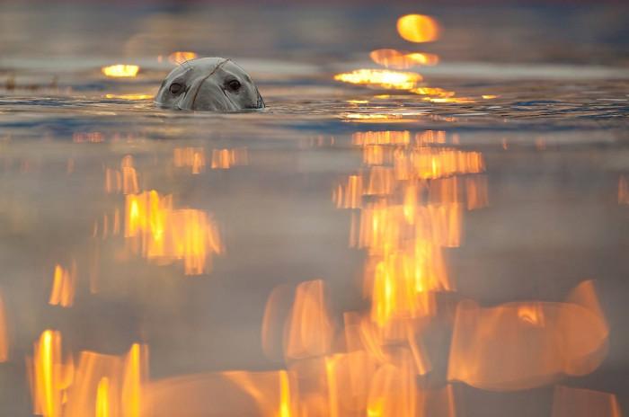 Красота шотландской природы (Фото)