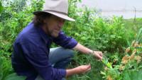 Пермакультура в городе от Джеффа Лотона (Видео)