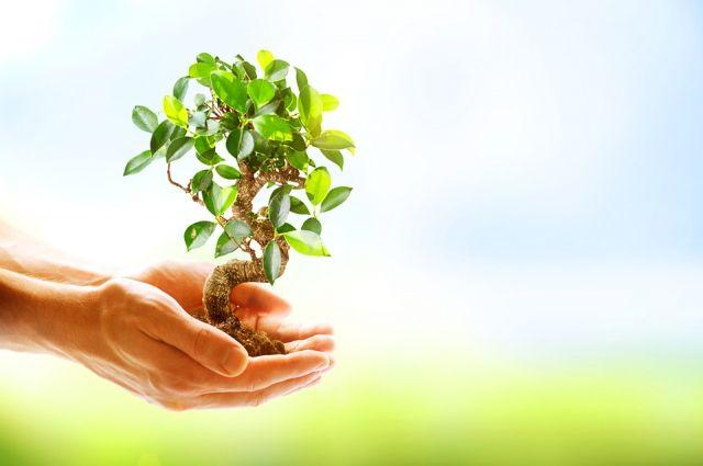 Японец посадил 10 000 000 деревьев в Китае (Видео)