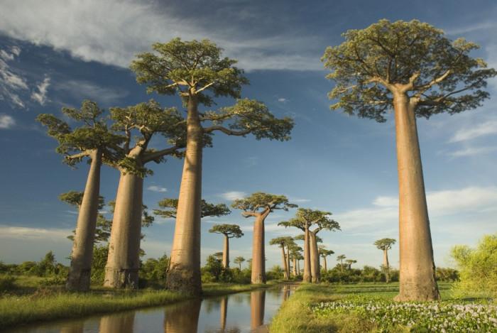 Самые невероятные деревья природы! (Видео)