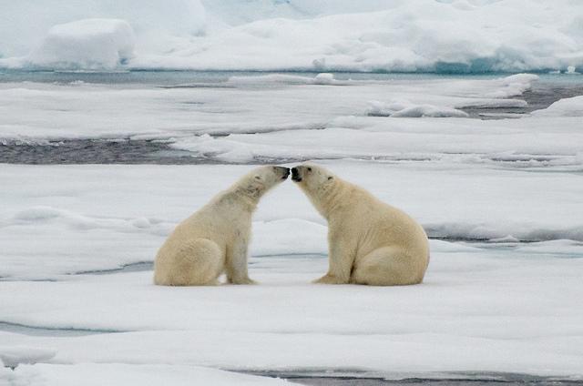 18 милых фото влюбленных животных, которые растопят даже ледяное сердце