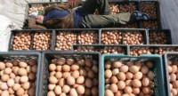 Максимальное распространение! Поддельные яйца из Китая! Как распознать подделку?