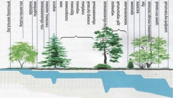 Поиск воды с помощью растений-индикаторов (+Фото)