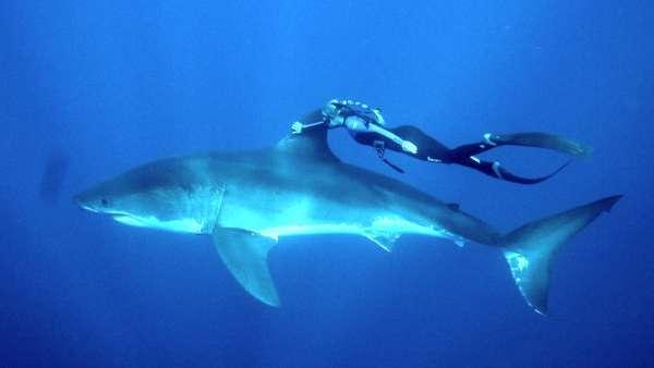 Картинки по запросу фото акула и женщина