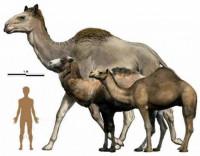Животные-гиганты, которые раньше населяли Землю (Фото)