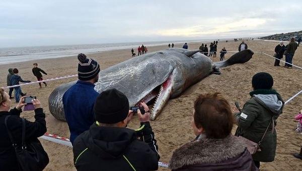 Когда ученые вскрыли живот мертвого кита-кашалота, их глазам открылась леденящая сердце картина